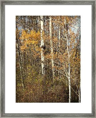 Framed Print featuring the photograph Wildlife Haven by Cindy Wright