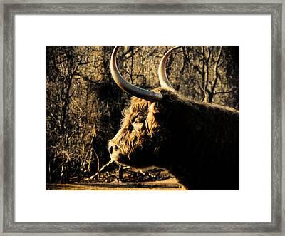 Wildthings Framed Print by Jessica Brawley