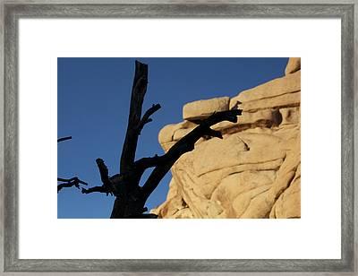 Will Desert Give Life Framed Print by Carolina Liechtenstein