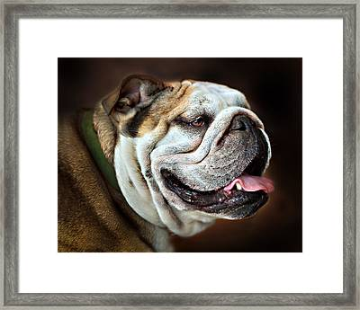 Willie Loves Me An English Bulldog Framed Print by Dorothy Walker