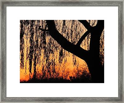 Willow At Sunset Framed Print by Valia Bradshaw