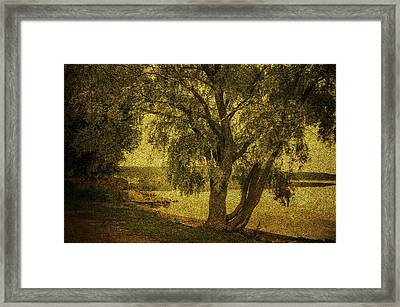 Willow At The Lake. Golden Green Series Framed Print