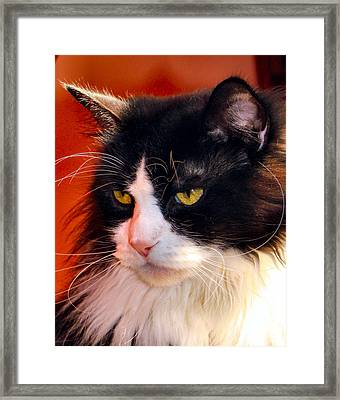 Willow Deep Thought Framed Print