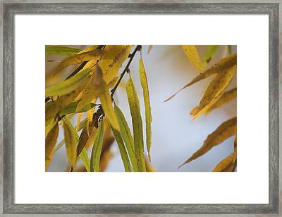 Framed Print featuring the photograph Willow Fall Leaves by Lisa Missenda