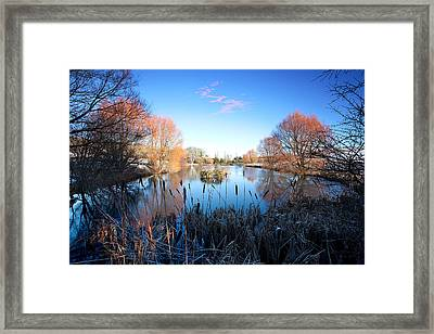 Willow Glow Framed Print by Kris Dutson
