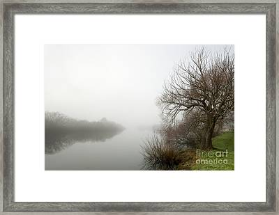 Willow In Fog Framed Print by David Lade
