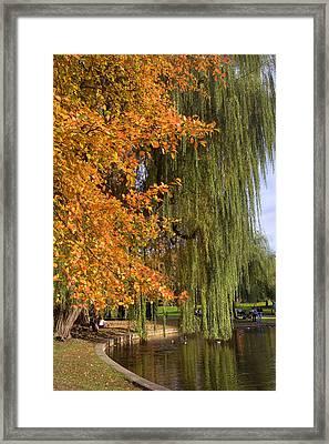 Willow In The Garden Framed Print