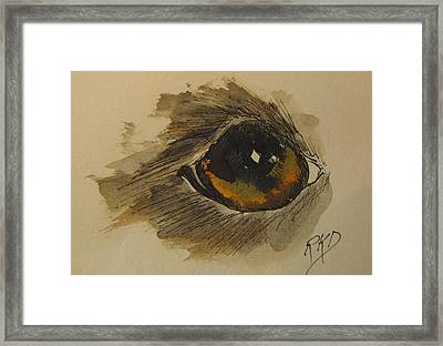 Willow Is Watching Framed Print by Ramona Kraemer-Dobson