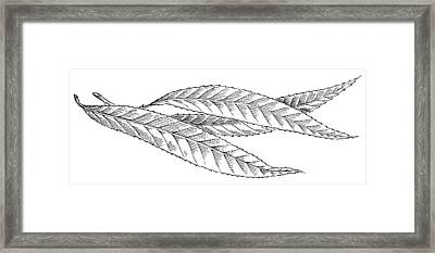 Willow Leaves, Woodcut Framed Print by Gary Hincks