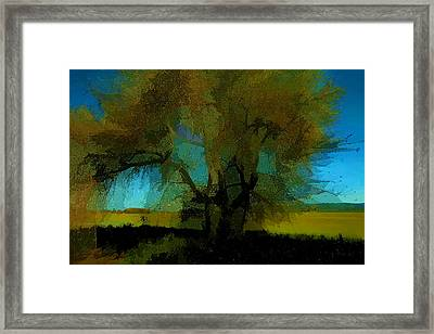 Willow Tree Framed Print by Bonnie Bruno
