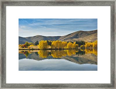 Willow Tree In Lake Tekapo Framed Print by Huoguangliang