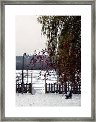 Willows And Berries In Winter Framed Print