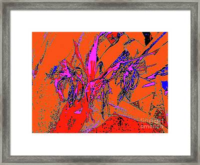 Wilted Spider Ws 24a Framed Print by Nina Kaye