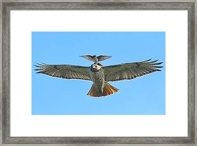 Wind Beneath My Wings Framed Print by William Jobes