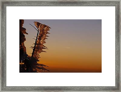 Wind-blown Icicles On A Tree Branches Framed Print