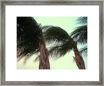 Wind Blown Framed Print by T Guy Spencer