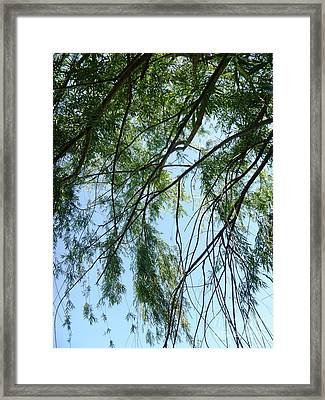 Wind In The Willow Framed Print by Alys Caviness-Gober