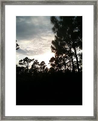 Wind In The Willows Framed Print by Rene Zaldivar Jr
