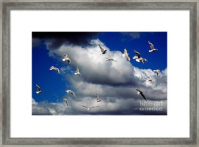 Framed Print featuring the photograph Wind Sailing Seagulls by Vicki Ferrari