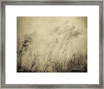 Windblown Framed Print by Arne Hansen
