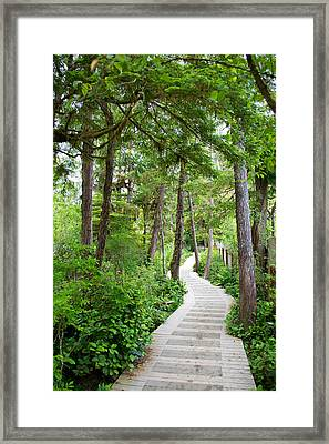 Winding Path Framed Print by Ivan SABO
