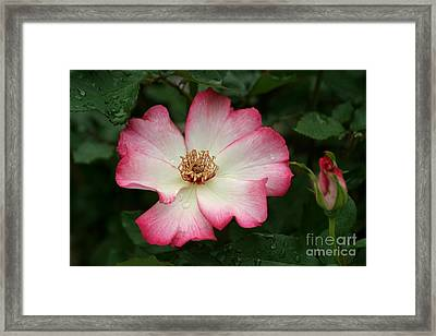 Framed Print featuring the photograph Windmill by Living Color Photography Lorraine Lynch
