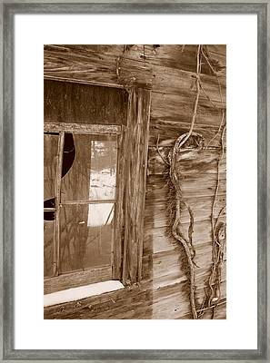 Window And Vine Framed Print