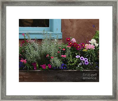 Framed Print featuring the photograph Window-box II by Sherry Davis