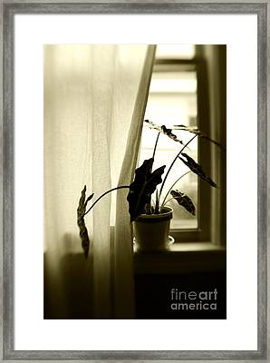 Window Framed Print by HD Connelly