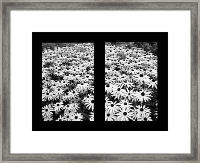 Window To Cheer Framed Print