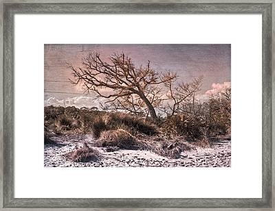 Windswept At Driftwood Beach Framed Print by Debra and Dave Vanderlaan