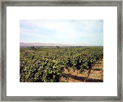 Wine Country Framed Print by Charles Robinson