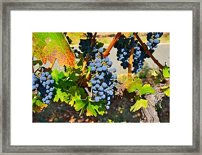 Wine Country Framed Print by Gloria Wannow