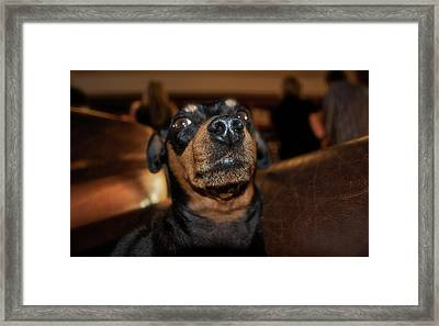 Wine Dog Framed Print by Lori Leigh