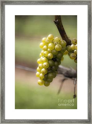 Wine Grapes Framed Print by Leslie Leda