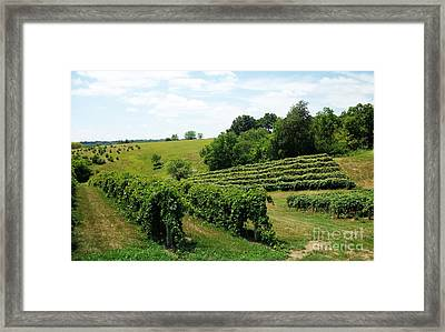 Winery In Iowa Framed Print by Marsha Heiken
