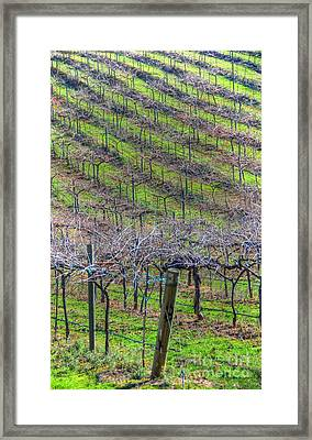 Winery Framed Print by Kelly Wade