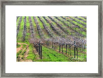 Winery Vineyard Framed Print by Kelly Wade