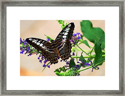 Wing Of Beauty Framed Print by Cheryl Cencich
