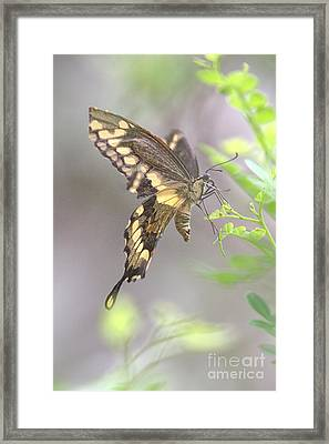 Framed Print featuring the photograph Winged Ballet by Anne Rodkin