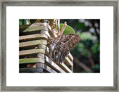 Winged Wood Framed Print