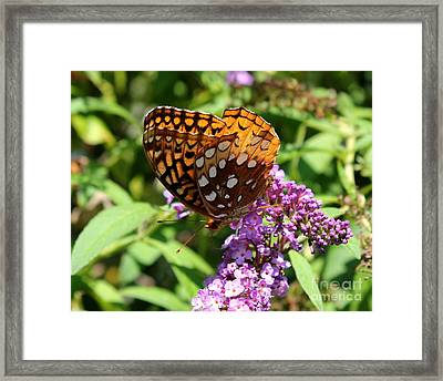 Wings Aglow Framed Print by Theresa Willingham