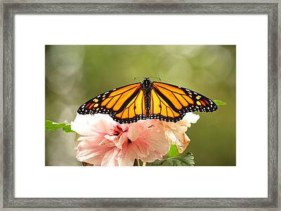 Framed Print featuring the photograph Wings At Rest by Kathy Gibbons