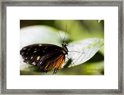 Wings Framed Print by Leslie Leda