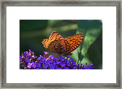 Wings Of Fire Framed Print by Cheryl Cencich