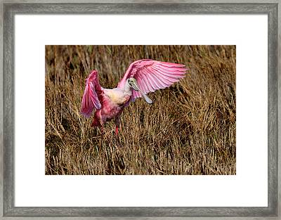 Wings Of Pink And Silk Framed Print