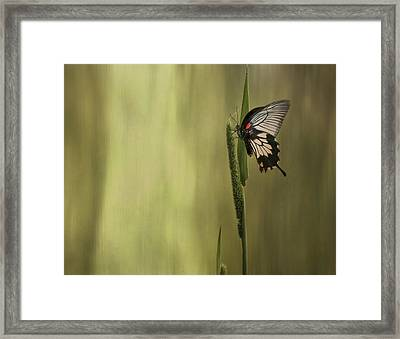 Wings Of The Heart Framed Print
