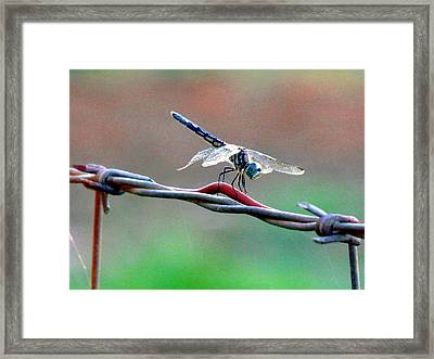 Framed Print featuring the photograph Wings Of Wire by Rdr Creative