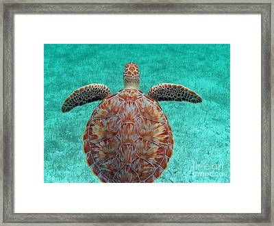 Wings Up Framed Print by Li Newton