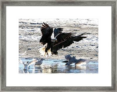 Wings Wings Wings Framed Print by Carrie OBrien Sibley